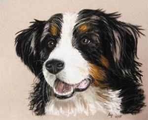 Hund Zeichnung Pastellkreide