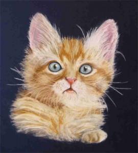 Katze Zeichnung Pastellkreide