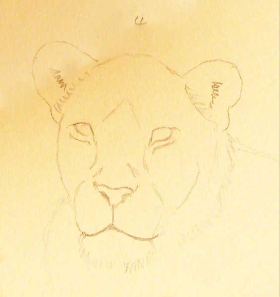 Motiv Zeichnen Schritt Für Schritt Löwenkopf Mal Einfach Mit