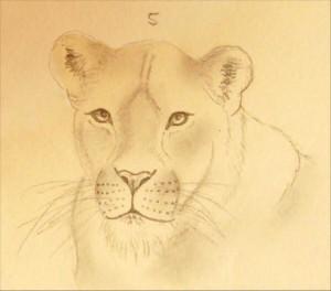 Löwe Zeichnung Bleistift