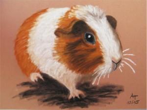 Meerschweinchen Zeichnung