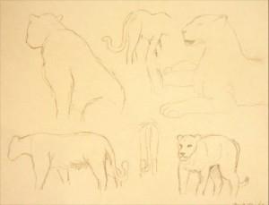 Löwe Bleistift Skizze