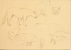 Löwe Bleistift Skizze Zeichnung