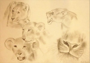 Skizze Zeichnung Löwe