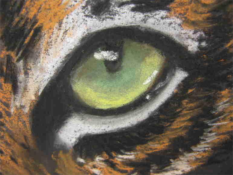 Tieraugen zeichnen Tiger