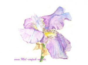 Iris Aquarell Blume Bild