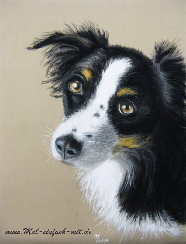 Hund Zeichnung Pastellkreide Shepherd Collie