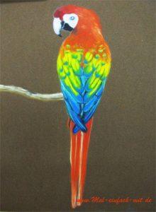 Papagei Vogel Zeichnung Pastellkreide