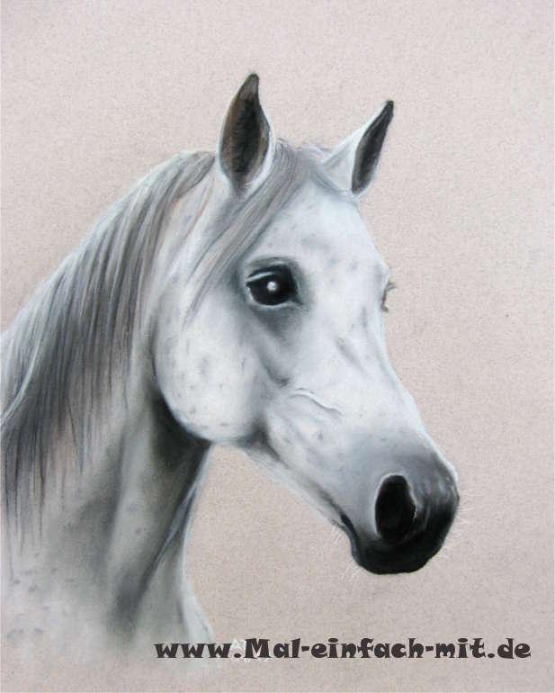 Pferd Porträt Zeichnung Pastellkreide