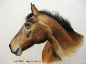 Pferd Zeichnung Pastellkreide Pferdeporträt